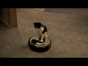 Chat aspirateur robot
